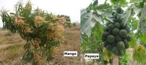plantaciones-1