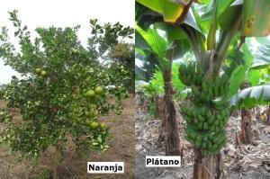 plantaciones-2